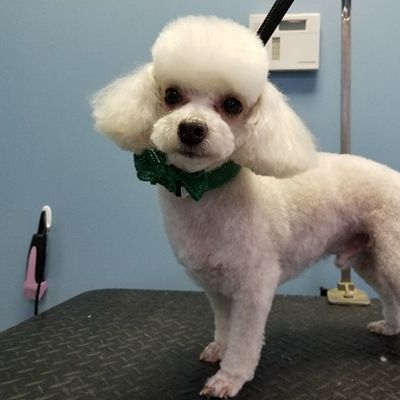 Dog Groooming With Love Lucky Puppy Dog Grooming