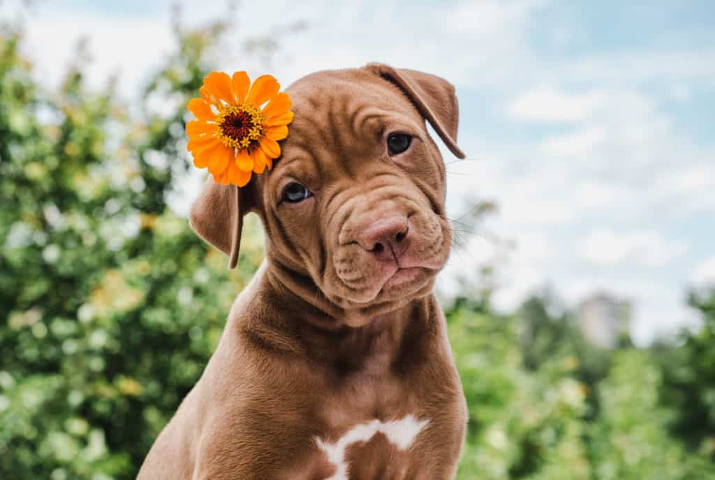 A Cute Dog with a Flower in Her Hair