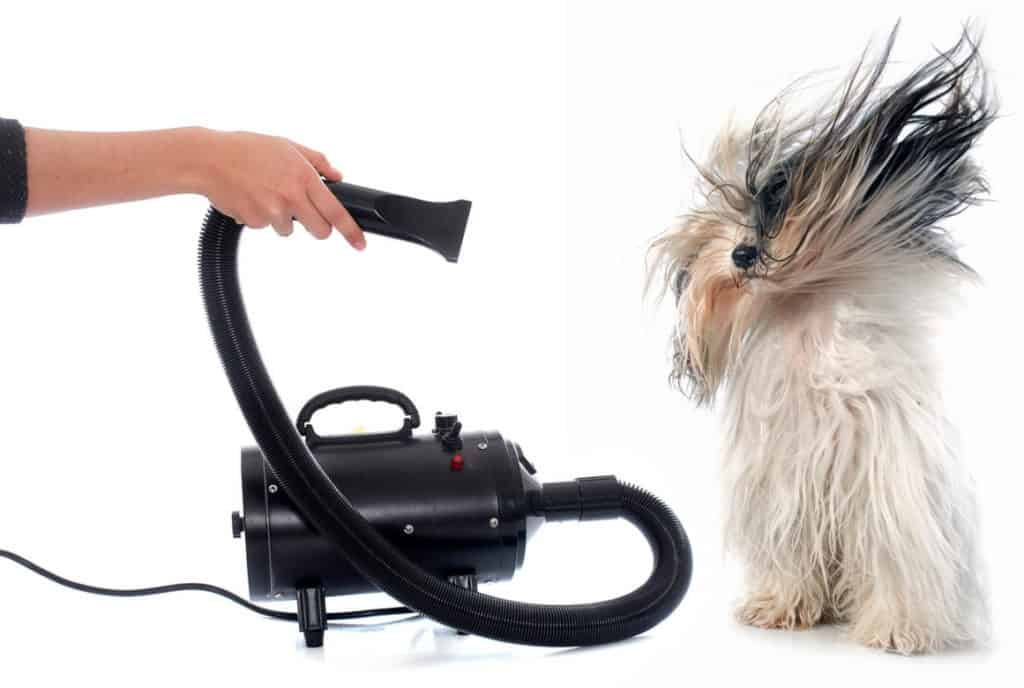 A Dog Being Blow Dried with a Portable Drier